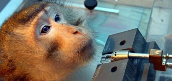 "Rhein-Neckar-Kreis: Initiative der ""Ärzte gegen Tierversuche e.V ... - heidelberg24.de"