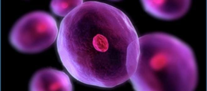Experimentos con células madre