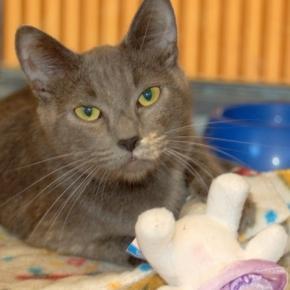 Daily CatScope for Taurus - cat facts « Adopt A LAPCAT - wordpress.com