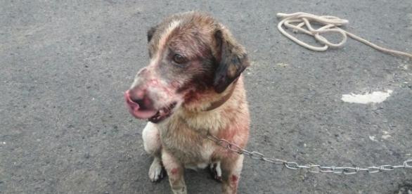 Cachorra sofre após ser arrastada por motociclista