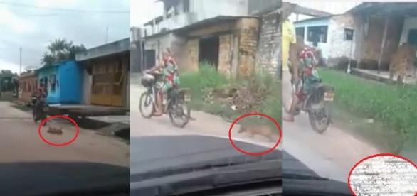 Mulher arrasta cachorro amarrado em motocicleta. Imagens fortes