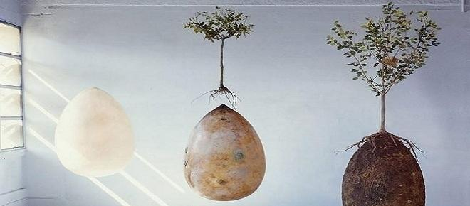 Adeus caixões! Cápsula orgânica transforma corpos falecidos em árvores