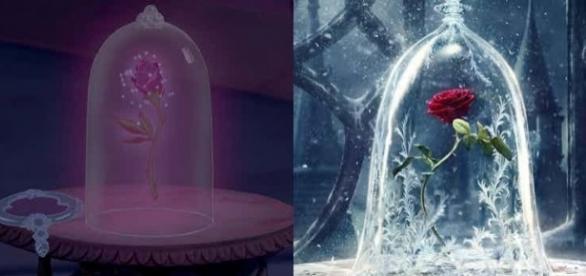 A rosa encantada (A Bela e a Fera). Imagens: reprodução Disney