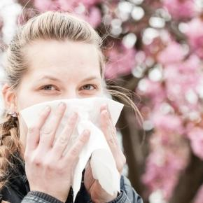 Allergien - Honig hilft bei Heuschnupfen? - 10 Allergie-Irrtümer ... - derwesten.de