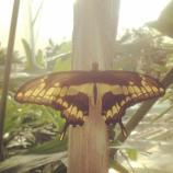 Un angolo di paradiso a Roma: apre il 25 marzo la Casa delle farfalle. Foto: facebook.