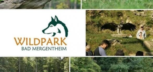 Wildpark Bad Mergentheim der grösste Europas