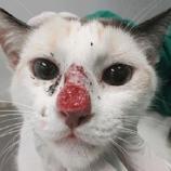 Cuidado ao ter contato muito próximo com seu gato de estimação