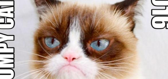 Favorite Sound | Grumpy Cat | Know Your Meme - knowyourmeme.com