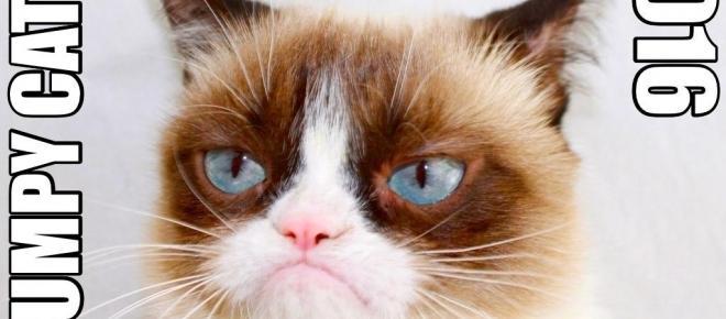 Avoir un chat serait bénéfique pour votre santé (et peut-être même plus...) !