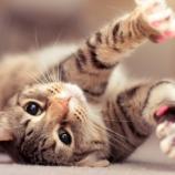 Los amantes de los gatos son más intelectuales | Kacri.com - kacri.com