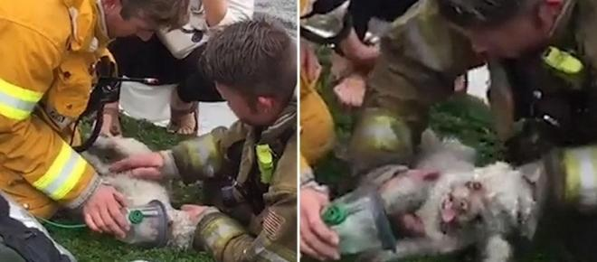 Santa Monica firefighter brings dog back to life after apartment fire using CPR