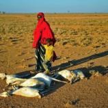 Somalia, drought, Famine humanitarian aid - voanews.com