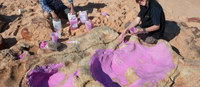 Australie : De nombreuses empreintes de dinosaures retrouvées