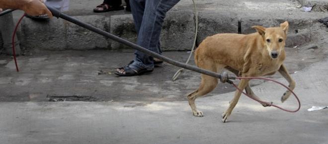 Palermo e la deportazione dei cani randagi: monta la protesta