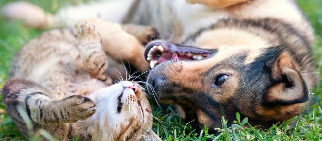 Ecco le piante pericolose per cani e gatti