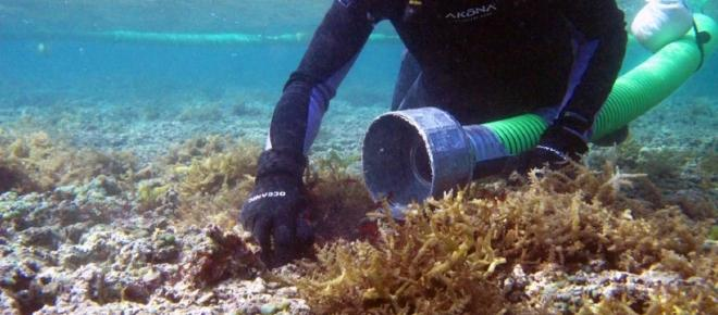 New research suggests land-based sources train corals with invasive microbes