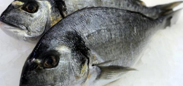 Ernährung: Ist der Verzehr von Fisch wirklich so gesund? - WELT - welt.de