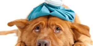 Saiba se o seu cachorro está doente - Nutricol Alimentos - com.br