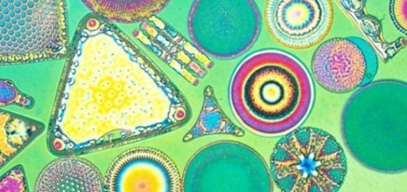 Il mondo osservato da un microscopio.