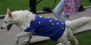 Gli effetti della Brexit su cani e gatti: spostamenti a rischio ... - lastampa.it
