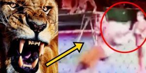 Leão ataca domador - Imagem/Google