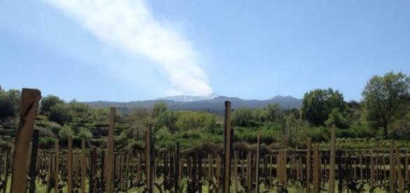Benanti Vineyards, Mount Etna Sicily