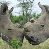 Animales: La ciencia ayuda al rinoceronte blanco: fecundación in ... - elconfidencial.com