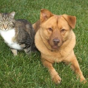 Hunde und Katzen verstehen - PETAkids - petakids.de
