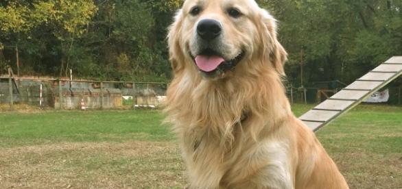 perro se acuerda de lo que has hecho - lavanguardia.com