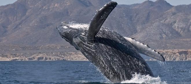 La Península de Baja California ya no pertenece a México, fue entregada a USA