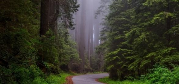 Inside Redwood National Park. tpsdave/Pixabay