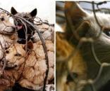 Taiwan proíbe consumo de carne de cachorros e gatos