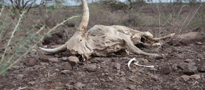 Äthiopien: Dürre-Katastrophe und Nestlé pumpt 50.000 Liter Wasser pro Stunde ab