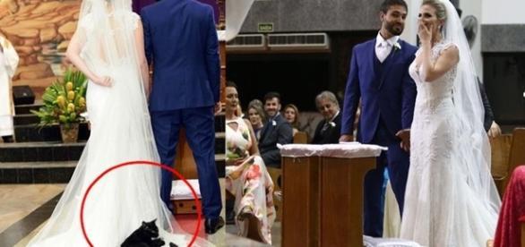 O gato foi descansar no vestido da noiva