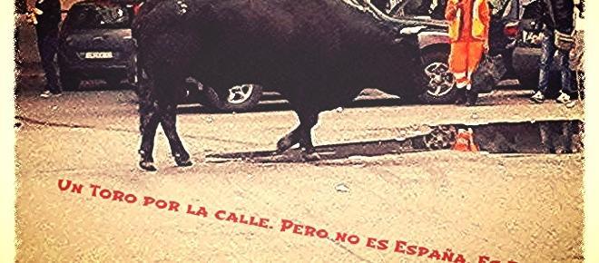 Un toro por la calle pero no es España, es Roma