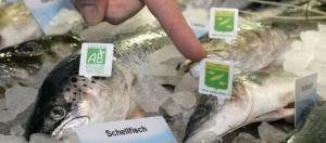 Fischvergiftungen: So erkennt man frischen Fisch und schützt sich ... - spiegel.de