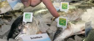 Fischvergiftungen: So erkennt man frischen Fisch und schützt sich ... - spiegel.de