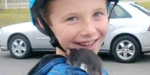 Family Sues Petco After Calif. Boy, 10, Dies From Rat Bite Fever ... - go.com