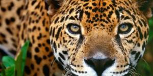 Gobierno del estado trabaja en la conservación y aprovechamiento ... - periodicotiempo.com