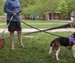 WKU kicks off volunteer week with dogs | Life | wkuherald.com - wkuherald.com