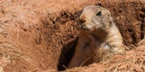 Donald Trump Jr. Plans To Hunt Prairie Dogs, People Are Upset ... - dailycaller.com