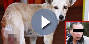Homem confessa estupro de cadela