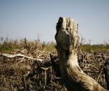 Il riscaldamento globale non ha mai raggiunto ritmi così elevati, conseguenze catastrofiche se continua così - rainews.it