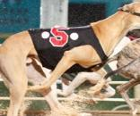 South Florida Greyhound Racing to ban steroids | Mardi Gras Casino - mgfla.com