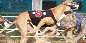 South Florida Greyhound Racing to ban steroids | Mardi Gras Casino - mgfla.com