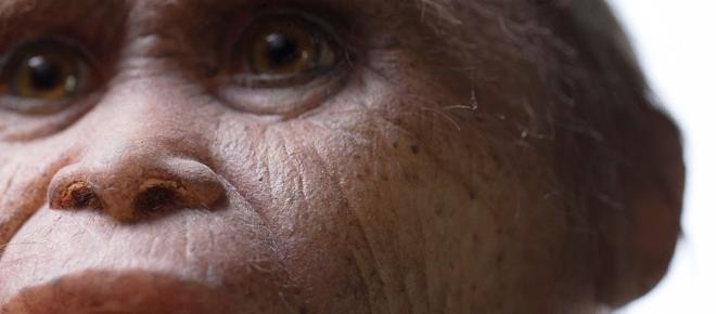 Hobbits - science finds real evidence that 'Hobbits' once existed