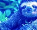 Conheça o Jogo da Peguiça Azul criado por brasileiros