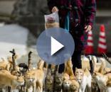 Ilha dos gatos, ilha japonesa é invadida por gatos