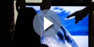 Baleia Azul tem reviravolta na justiça - Google