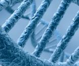 Si chiama Tnsfs13b ed è il gene che causa Lupus e Sclerosi multipla